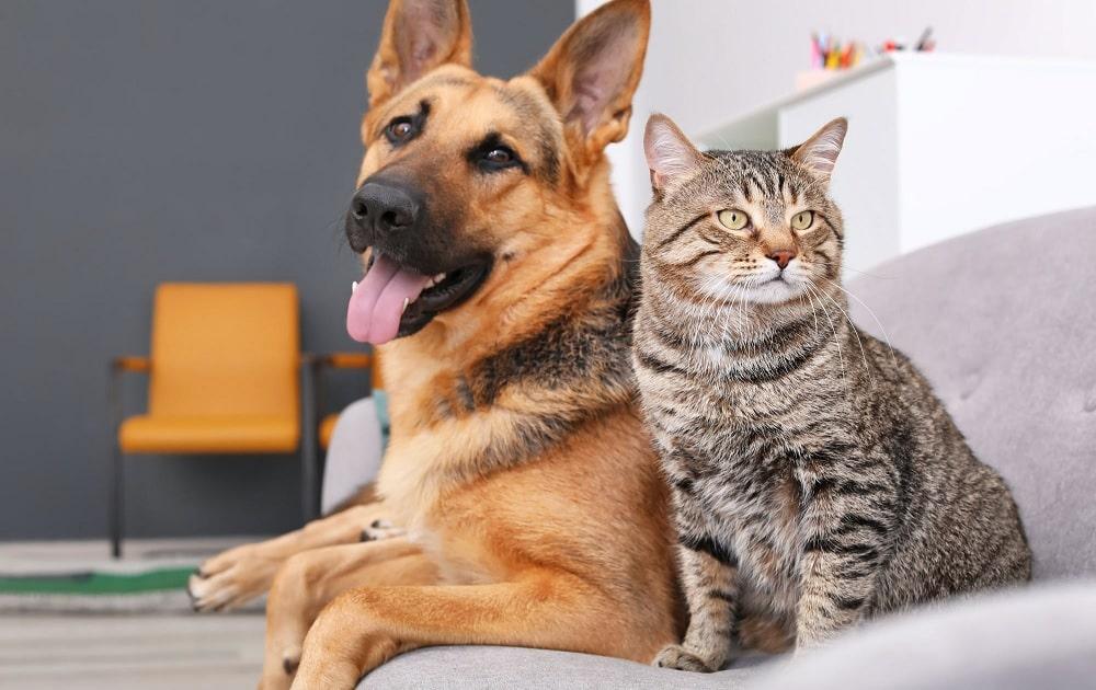 Les animaux sont-ils interdits dans les résidences sociales ? - Unafo